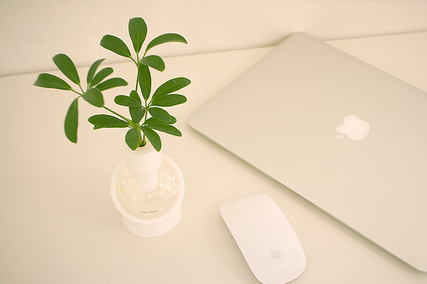 Capsule plants
